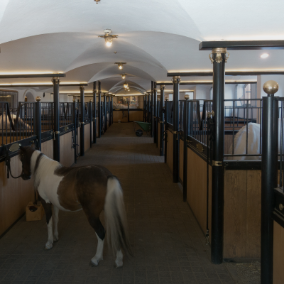 News - Preview Equine Business 2021 Verden | NORKA Automation